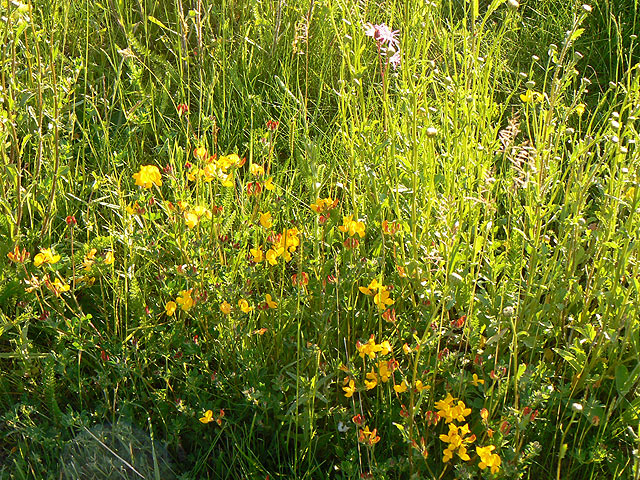 Wildflower Meadows- River Barn Garden Malmesbury