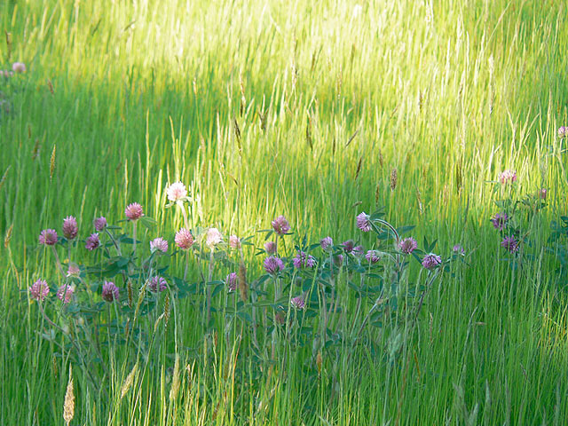 Wildflower Meadows- River Barn Garden Malmesbury