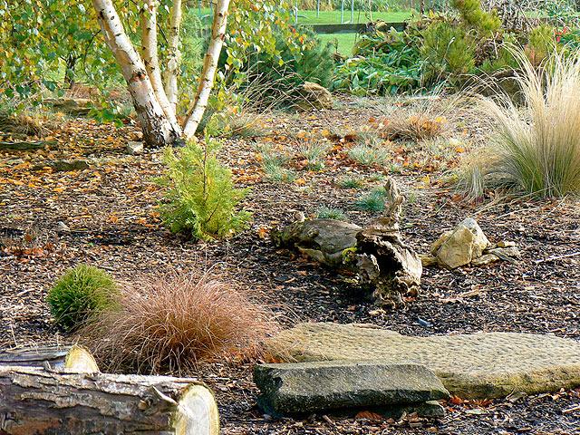 The Pinetum - River Barn Garden Malmesbury