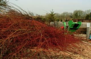 pollarding willow River Barn