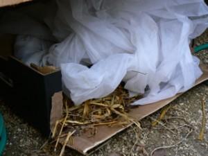 hedgehog box in unheated greenhouse