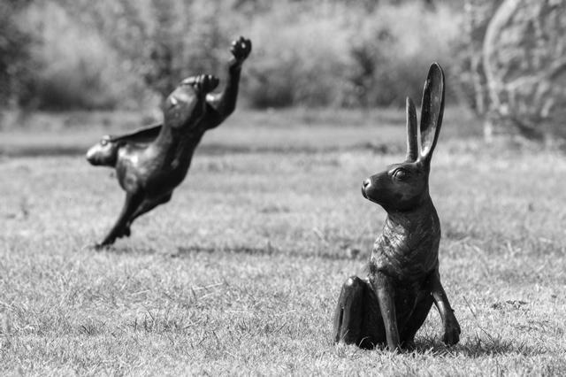 hares,stone circle
