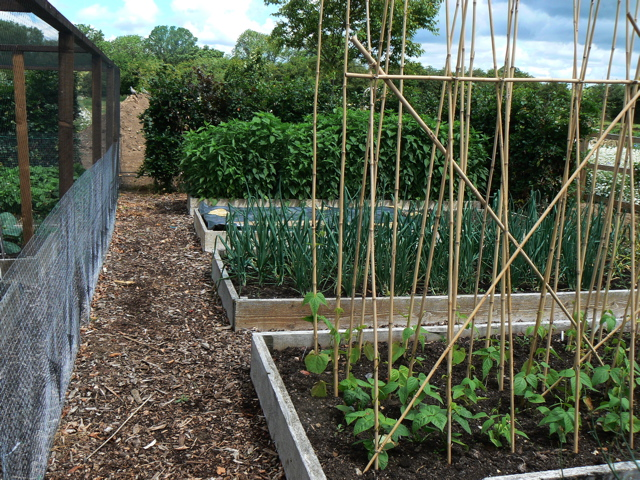 raised vegetable beds and fruit cage