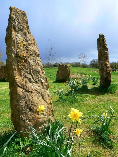 stone circle, daffodils