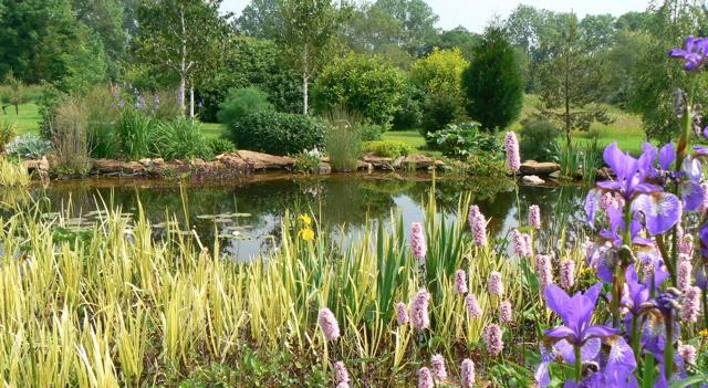 plants round the wildlfie pond