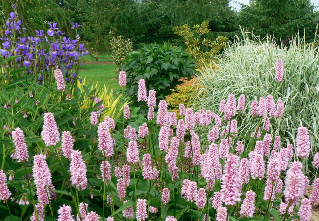 ornamental widllife pond