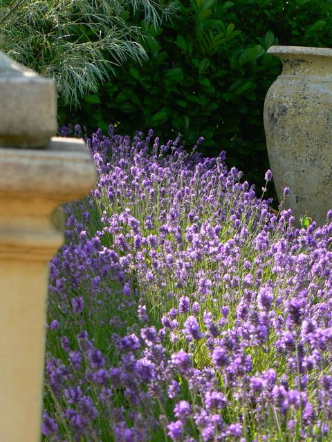 lavender, ballustrade, sun